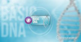 gallery basic dna